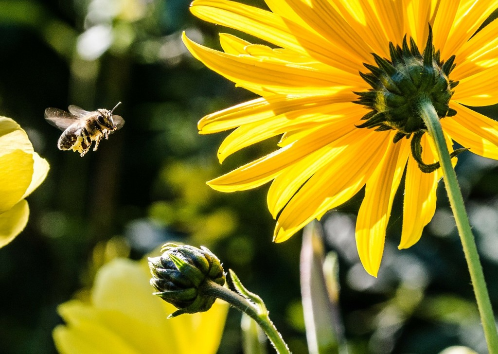bee-in-the-approach-209145_1280